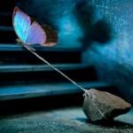 butterfly+pulling+rock