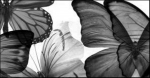 black_white-butterfly-2